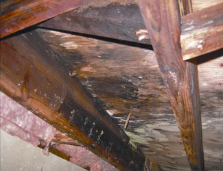 mold and rot in a Sun Valley crawl space